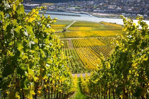 achat d'un vignoble Languedoc